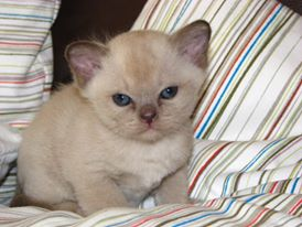 Kitten von der Liebessphaäre